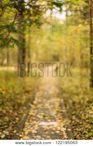 Blurred boke background of Wooden boarding path way pathway in autumn forest.