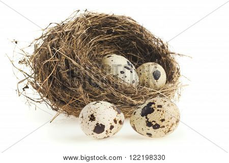 close-up quail eggs in a nest on a white background