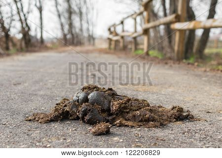 A pile of horse manure on a paved road. The manure is high in hay and straw.