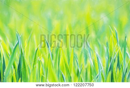 Green corn field in spring. Seasonal agricultural theme. Beauty in nature. Illustration with colored pencils.