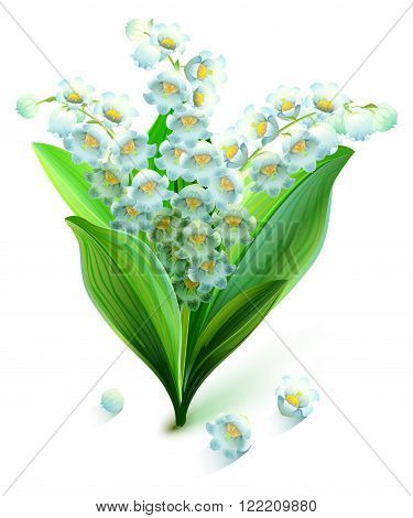 Flower lily valley. Bouquet lily of valley. Isolated on white vector illustration