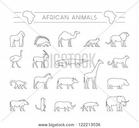 Vector set outline African animals. Vector line silhouette of gorila warthog porcupine and dromedary. Geometric linear animals of Africa. The outline silhouette ostrich hyena springbok and zebra.