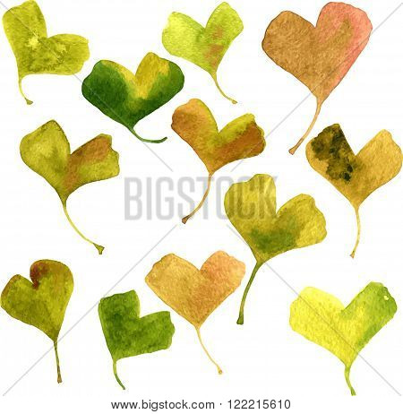 set of vector watercolor green leaves of ginkgo, hand drawn vector design elements