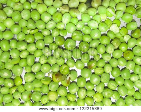 Green Peas and pea fruit the legume on white background.Its a winter foodedible rawrich in vitaminesgood foor healtheye and teeth.Photo taken on 31st January 2016.