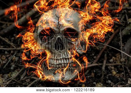 human skull on fire in forest darkness concept; horror halloween