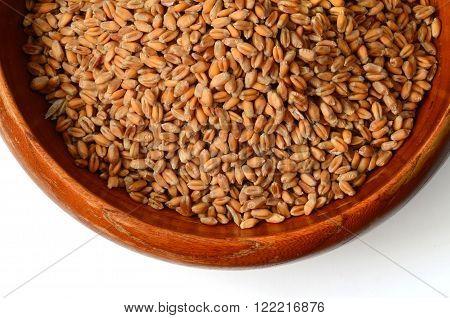 Uncooked Wheat Grain