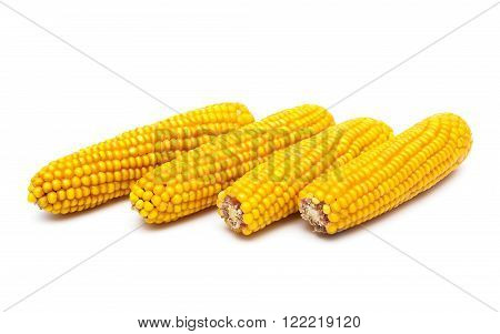 Four ear of corn on a white background. horizontal photo.