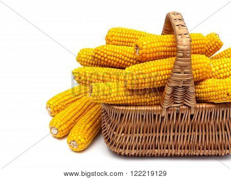 basket with ripe ears of corn on a white background. horizontal photo.