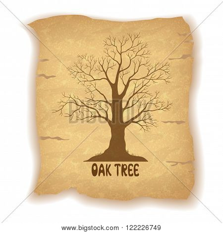 Oak Leafless Tree Silhouette and the Inscription on the Vintage Background of an Old Sheet of Paper. Eps10, Contains Transparencies. Vector