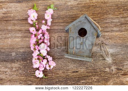 fresh cherry twigs with pink   flowers  and birdcage on wooden table