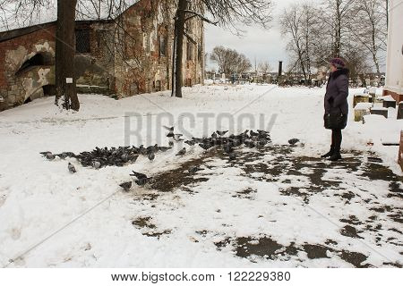 Novaya Ladoga, Russia - 23 February, Pigeons in the churchyard, 23 February 2016.