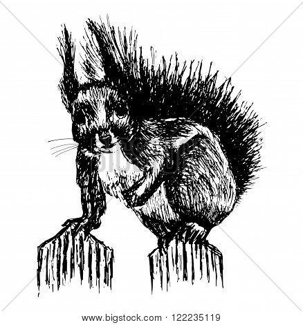 furry wild little squirrel with hair sticking is sitting on the wooden fence sketch ink hand drawn vector illustration