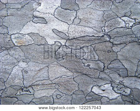 Stone background.Lichens (Rhizocarpum geographicum) covering rock surface