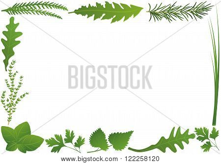 Culinary herbs forming a horizontal frame. Isolated vector illustration over white background.