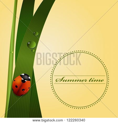 Green grass, stem, dew drops, cute ladybug. Summer season. Vector illustartion.