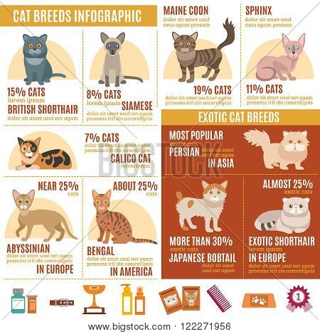 Cats infographics set with exotic breed icons and pet care elements vector illustration