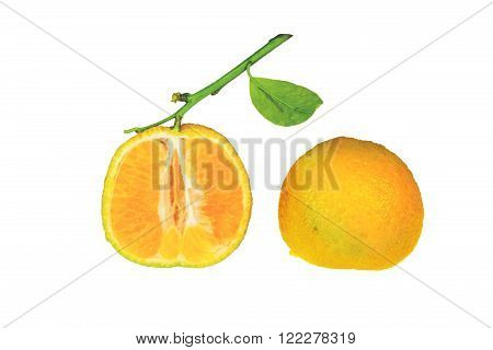 Clementine With Green Leaf Cutted In Half