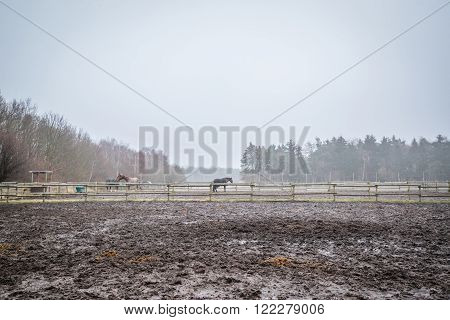 Muddy Field With Fenced Horses