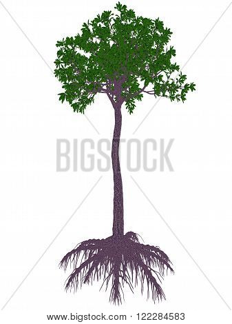 Glossopteris prehistoric tree isolated in white background - 3D render