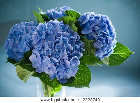 blue hydrangea blossom in a vase.