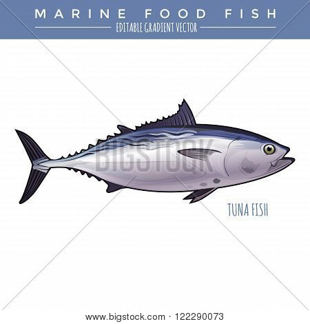 Tuna illustration. Marine food fish, editable gradient vector