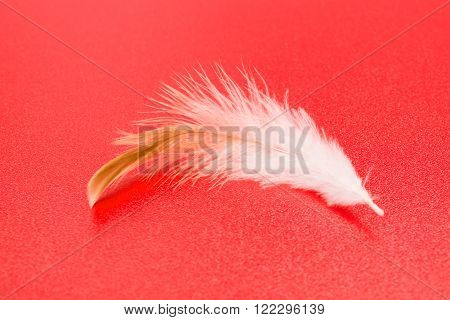 White Feather On Red