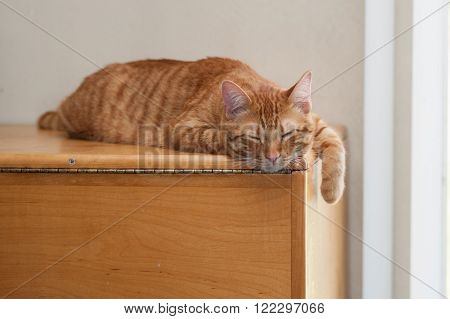 Striped Tabby cat on wood grain with eyes closed to right.