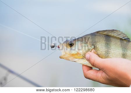 Fishing in river. A fisherman with a fishing rod on the river bank. Man fisherman catches a fish.