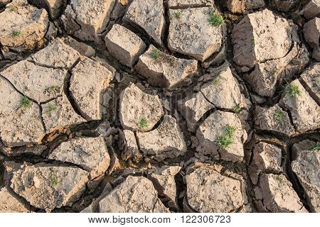 Cracked earth,Drought,Dry land,Dry tree,Dry Dam.Selective focus on Cracked earth.