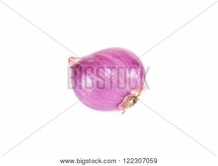 One Shallots isolated on a white background.