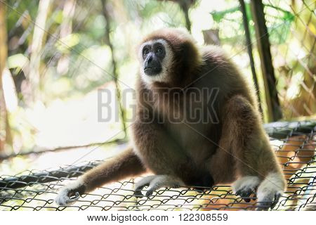 a white hand and brown gibbon in the zoo