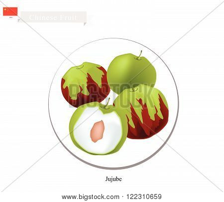 Chinese Fruit Illustration of Jujube or Chinese Date. One of Most Popular Fruits in China.