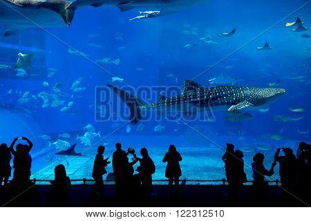 Japan Okinawa aquarium