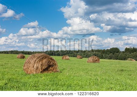 Field With Haystacks And Trees.