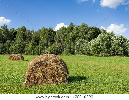 Field with haystacks and green trees under blue sky with white clouds under sunlight