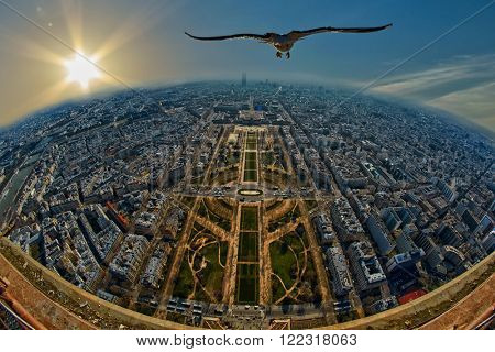 Freedom concept - Seagull flying over Mars Field in Paris, France