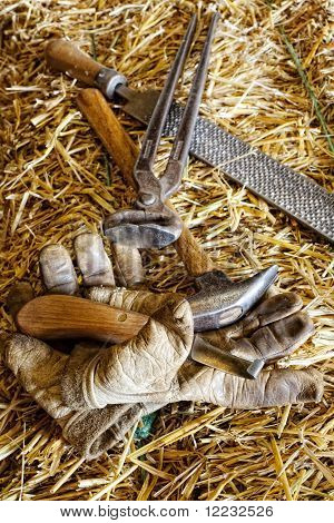Horse Care Implements