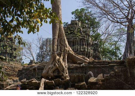 Angkor Wat, Siem Reap, Cambodia - Februaty 10, 2015 :: Tree roots growing through the ruins of Ta Prohm Temple at Angkor Wat in Cambodia