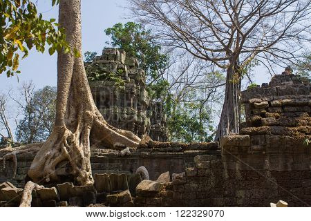 Tree Roots Growing Through The Ruins Of Ta Prohm Temple