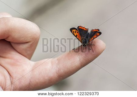 an orange butterfly standing on a chldren?s finger