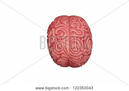 Brain isolated white background. Neuromanagement and analytical thinking