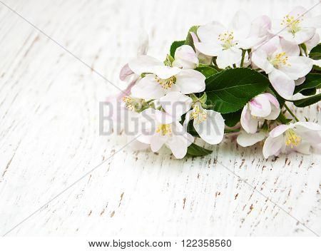 Apple blossoms on a old white wooden background