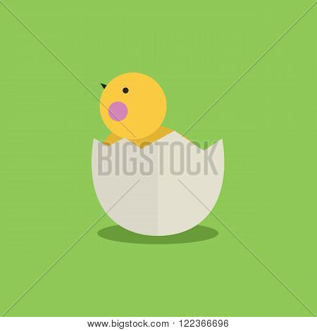 Cute cartoon little chicken in egg shell.Cartoon little chicken vector bird flat style.Chicken bird isolated on background.Farm bird.Vector Cute Chicken character farm animal bird.Chick farm bird