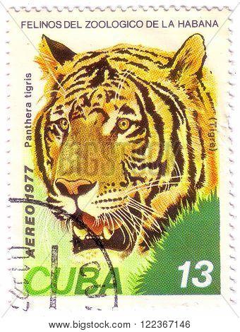 Cuba-circa 1977: A Stamp Printed In The Cuba Shows Tiger - Panthera (tigris), Circa 1977