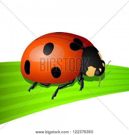 Vector icon - illustration of ladybug isolated on white