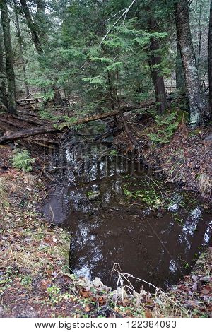 A woodland stream allows the water from the swamps of the Naas-Raunecker Nature Preserve of Harbor Springs, Michigan to empty into Lake Michigan.