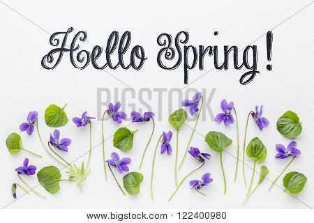 Hello Spring greetings with fresh viola flowers  and leaves on white art canvas