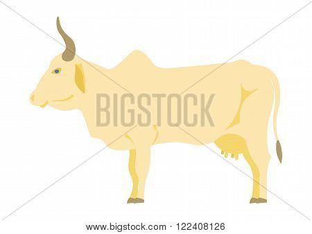 Indian cow vector illustration. Indian cow  on the white background. Indian cow isolated vector
