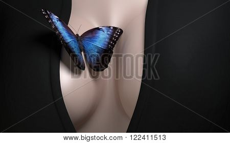 Butterfly with blue wings sitting on naked woman brest