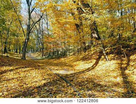 Golden sunny autumn city park with paths strewn with yellow maple leaves.